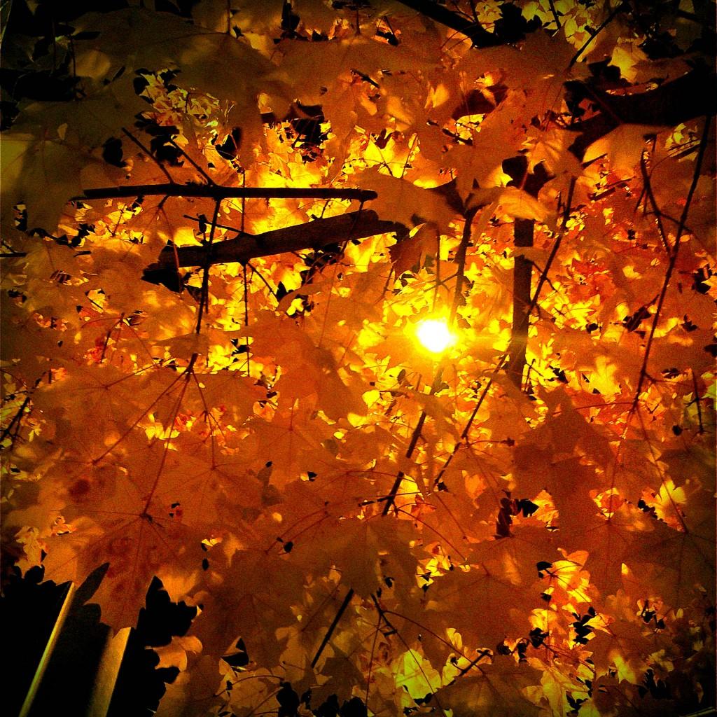 moments précieux de la vie : lumière d 'automne par thevaultblue moments précieux de la vie